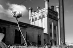 A su altura (ameliapardo) Tags: flores blancoynegro edificio arquitectura fujixt2 villanuevadelrioyminas sevilla