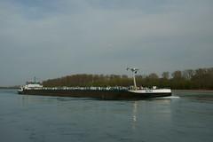 TMS NEMO (Lutz Blohm) Tags: tmsnemo gütermotorschiff rhein rheinschifffahrt binnenschifffahrt speyer binnenschiffe sonyalpha7aiii sonyfe24105mmf4goss rheinkilometer401 rheinzuberg tankschiff