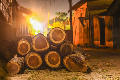 Tree logs (Canon EOS 1300D) Tags: outdoor log nature landscape winter forest wood tree green background wooden energy stars trees forestry texture cut abstract branch night closeup outdoors environment fall fuel glow rural trunk beautiful industry construction cold natural plant hand held