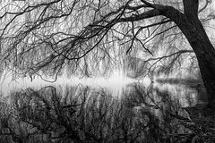 Winter Sketch (Tracey Whitefoot) Tags: 2019 tracey whitefoot january winter colwick park nottingham notts nottinghamshire tree reflections water calm still freezing fog mono monochrome black white