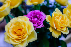 Pretty But Odd One Out!! (BGDL) Tags: lightroomcc nikond7000 bgdl niftyfifty nikkor50mm118gnikon bouquet roses oddoneout smileonsaturday