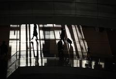 Twilight (reiko_robinami) Tags: streetphotography silhouette lightandshadow shadow monochrome blackandwhite urban tokyo japan