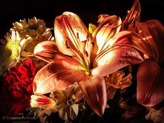 Fading. #Takoma #dc #dclife #washingtondc #iphone #iPhonemacro #macro  #flower #flowersofinstagram (Kindle Girl) Tags: iphone takoma dc dclife washingtondc iphonemacro macro flower flowersofinstagram