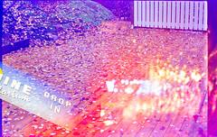 20181112-13  dubbelexponeringsrulle  med jonas -  ektachrome 100sv - canon f1n och 50mm 1.4 fd (Sina Farhat - Webcoast) Tags: light ljus höst autumn fall gothenborg göteborg sweden sverige home hemma 031 bokeh skärpedjup 35mm raw photoshopcc analog film positiv dubbelexponering doubleexposures jonas slidefilm e6 kodak ektachrome100sv expiredfilm tetenalcolortece6kit leaves löv dslrscanned tree sky flower bird forest