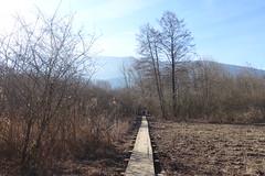 Boardwalk @ Réserve naturelle du Bout-du-Lac @ Doussard @ Walk in Sources du Lac d'Annecy (*_*) Tags: february afternoon 2019 hiver winter annecy 74 hautesavoie france europe sourcesdulacdannecy savoie walk randonnée nature hiking mountain marche doussard forest naturereserve parc