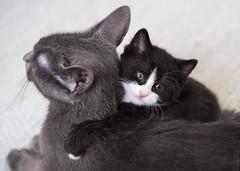 20180314_4054c (Fantasyfan.) Tags: mikinpennut rekku rescue kitten cat fantasyfanin