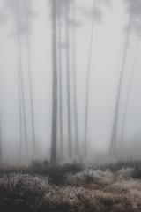 In the Fog II  /07 (KromOner) Tags: kromoner art design minimal dark nature forest trees woods silent solitude silence mood atmosphere quiet canon austria fog foggy mist misty winter