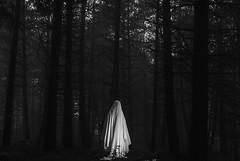 Evocation (AnimaMundi_) Tags: evocation forest dark animamundi essence fog mist nature sacred dreamy illusion concept vision photography atmosphere art fineart bnw blackandwhite tree fall cold veil