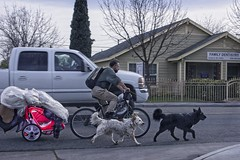 FAMILY & POSSESSIONS ON THE MOVE (akahawkeyefan) Tags: homeless bicycle cart dogs fresno davemeyer