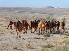 Karakum Desert (LeelooDallas) Tags: asia turkmenistan karakum desert sand landscape sky dana iwachow dragoman silk road overland trip september 2018 dune shrub