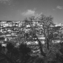 View of Covilhã (lebre.jaime) Tags: tree city building house portugal covilhã ptbw hasselblad 500cm distagon c3560 analogic film120 mf mediumformat 6x6 squareformat rollei retro80s blackwhite bw pb pretobranco noiretblanc epson v600 affinity affinityphoto