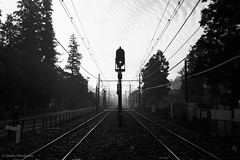 N0252019 (toshyie) Tags: leicam6 summaronm35mmf28 tmax400 foggy morning film フィルム モノクローム signal シルエット silhouette japan kodak