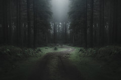 Deception (www.neilburnell.com) Tags: woodland forest trees eerie mood landscape mist fog path