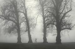 Teeing Off (Glenn D Reay) Tags: fog foggy trees golf morning pentaxart pentax k70 sigma1770hsm glennreay