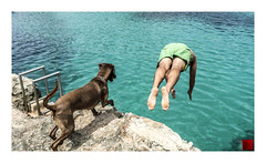 donde quiera que vaya / wherever he goes (K_BAU) Tags: salto jump water dog perro chien amistad friendship