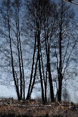 Trees Reflection. (ALEKSANDR RYBAK) Tags: изображения деревья отражение вода трава небо поверхность природа погода images trees reflection water grass sky surface nature weather