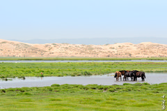 Summer day... (N.Batkhurel) Tags: season summer sky övörkhangai landscape lake animals horse water dune ngc nikon nikond5200 natur 24120mm