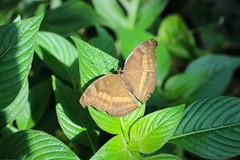 Vacances_0871 (Joanbrebo) Tags: mainau konstanz badenwürttemberg de deutschland mariposa butterfly papallona papillon farfalle canoneos80d eosd autofocus