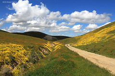 """""""Off We Go Into The Wild Blue Yonder"""" (Day Night Tripper) Tags: blooms blossoms bushlupine california californiapoppy canyons creek daisy eschscholtziacalifornica fiddlenecks flowers foothills goldfields grass hilsidedaisies lupine lupines mountains poppies poppy rivers streams trees wildflowers"""