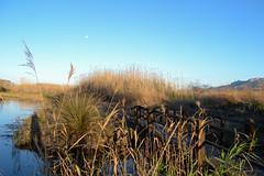 Marjal de Pego 15 (dorieo21) Tags: pego marjal marsh