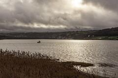 Tivy Estuary (dannie843) Tags: tivyestuary wales ceredigion hightide sky watergrayclouds winter sea cymru