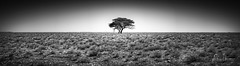 The Tree Grows Of Its Own Accord (Alec Lux) Tags: bw bnw etosha adventure africa art black blackandwhite desert dry empty fine fineart grass infinity landscape minimal minimalism monochrome namibia nature outdoor pan pano panorama parc plains plants reserve safari salt sand savannah scenic sky steppe travel traveling tree trees trip vast white