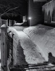 Winterscape 2019 # 70  ... ; (c)rebfoto (rebfoto...) Tags: snow winter rebfoto winterscape nightphotography backyard