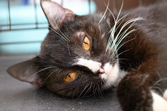 Selfie (petr.petrov) Tags: animal cat domestic pet homeless shelter face eyes cats animals russia