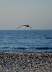 flying (ericgrhs) Tags: möwe seagull sea balticsea ostsee beach warnemünde rostock sand sandstrand