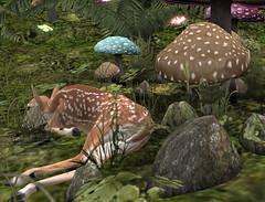 022019_019 (davidheiserman) Tags: deer fawn forest mushrooms butterflies