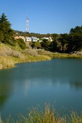 Lake Merced Sutro (phoca2004) Tags: birds birding z6 nikon sanfrancisco sutrotower lakemerced california unitedstatesofamerica us