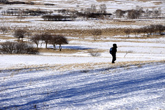 Tlree lines (MelindaChan ^..^) Tags: innermongolia bashang china 內蒙古 壩上 trees line plant snow snowscape nature chanmelmel mel melinda melindachan