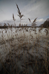 IMG_7501 (Luck-o-matic) Tags: масленица смоленск весна россия фленово smolensk russia spring