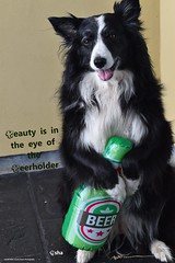 Beauty in in the eye of the Beerholder (ASHA THE BORDER COLLiE) Tags: st patricks day funny dog quote border collie beer green ashathestarofcountydown connie kells county down photography
