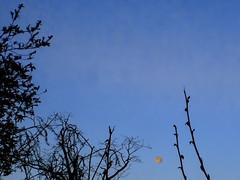 Morning moonset (cizauskas) Tags: moon moonrise wormmoon supermoon fullmoon bluehour morning spring decatur georgia astronomy