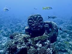 Polynésie 2019 - Tahiti diving (Valerie Hukalo) Tags: tiki valériehukalo hukalo france polynésiefrançaise polynésie frenchpolynesia polynesia océanie oceania océanpacifique pacificocean diving plongéesousmarine plongée underwaterphotography photographiesousmarine tahiti archipeldelasociété