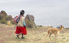 18 2617 - Pérou, Sillustani (Jean-Pierre Ossorio) Tags: pérou capachica lac lacumayo alpaga femme costume
