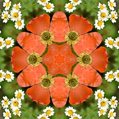 Kaleido Abstract 1944 (Lostash) Tags: art photography edited abstract kaleidoscopes patterns shapes symmetry