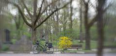 2019 BIke 180: Day 51, April 9 (suzanne~) Tags: 2019bike180 bike munich bavaria germany cemetery alternordfriedhof spring