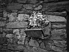 Jardín colgante (Luicabe) Tags: airelibre blancoynegro cabello enazamorado exterior gris hojas luicabe luis maceta madera mampostería monocromático ngc pared piedra planta tiesto yarat1 zamora zoom