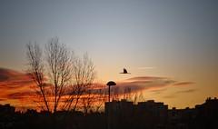Cree que puedes hacerlo y ya habrás recorrido medio camino. (elena m.d.) Tags: sunset landscape guadalajara nikon d5600 sigma sigma105 elena clouds sky 2019