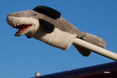 170408_126_SnF_N47KL (AgentADQ) Tags: sun n fun flyin expo airshow airplane plane lakeland florida 2017 1947 cessna 195a n47kl left shark
