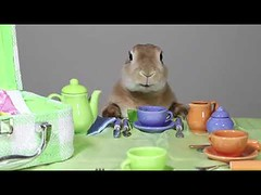 Cute bunny good table manner (tipiboogor1984) Tags: aww cute cat funny dog youtube
