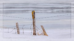 The Thaw  HFF (Note-ables by Lynn) Tags: hff fencefriday fences winter painterly