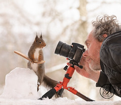 Red squirrel standing on skis and man behind a camera (Geert Weggen) Tags: squirrel camera red animal backgrounds bright cheerful close color concepts conservation culinary cute damage day earth environment environmental equipment love valentine photo winter snow openmouth ski sport wintersport man person human photographer geert bispgården jämtland sweden weggen hardeko ragunda
