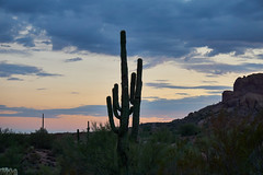DSC00640 (wNG555) Tags: 2014 arizona phoenix apachejunction apachetrail superstitionmountain sunset a6000 ilce6000