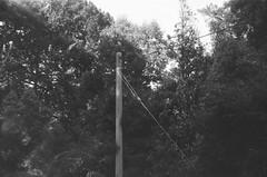 Utility pole (Matthew Paul Argall) Tags: spartus35fmodel400 35mmfilm blackandwhite blackandwhitefilm kentmerepan100 100isofilm utilitypole