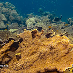 Coral reef of the Surin islands, Thailand, Indian Ocean thumbnail