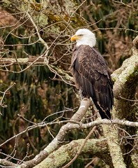 Bald Eagle (jmfuscophotos) Tags: sullivancounty baldeagle birdofprey rioreservoir nature bird birds newyork newyorkstate raptor wildlife eagle