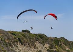 2014-06-06_14-37-10 Soaring with the Birds (canavart) Tags: canada britishcolumbia bc victoria paraglider paragliding paragliders dallasroad dallasrd bluffs spiralbeach